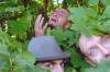 Karpatt + Florent Vintrigner